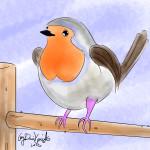 little robin color