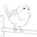 little robin-flipped