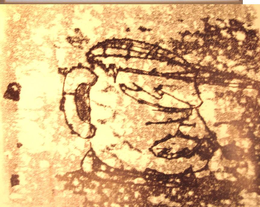 mug-shot print